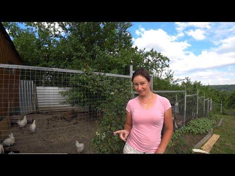 Вопрос: От какой птицы в дикой природе произошла домашняя курица?