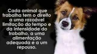 Declaração dos Direitos dos Animais by Lionel Falcon