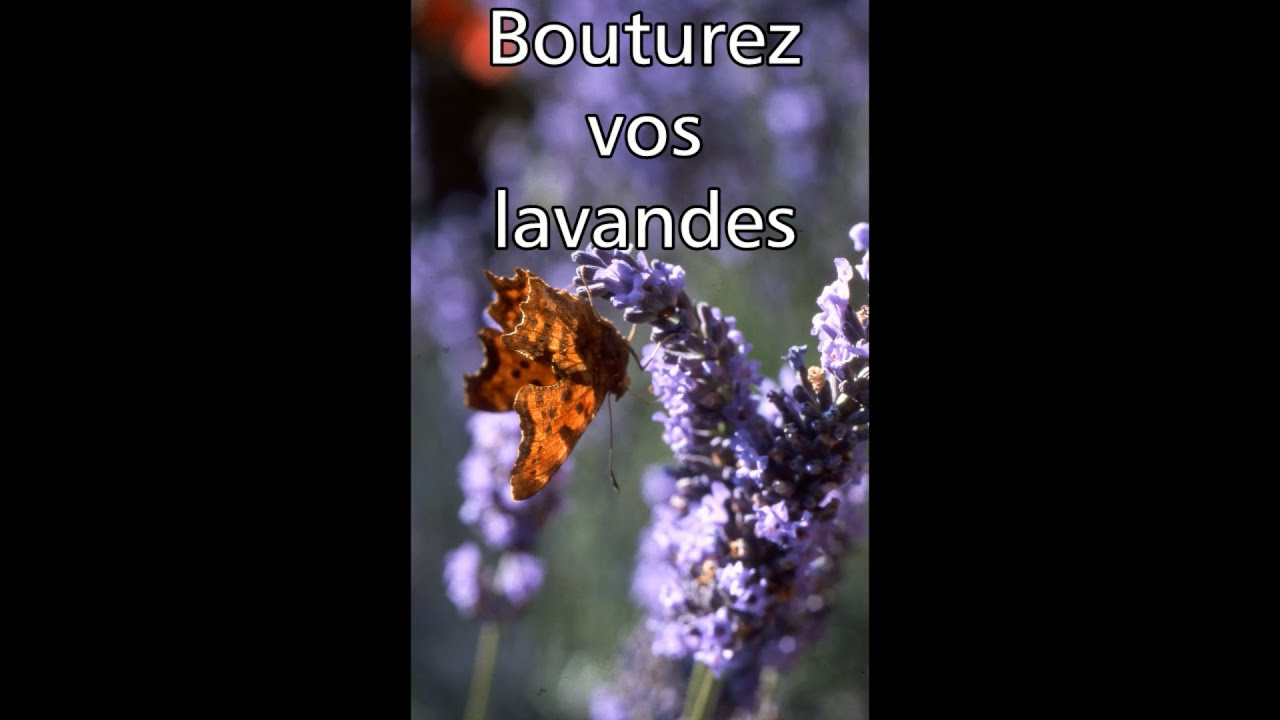 les 4 saisons du jardin bio bouturez vos lavandes youtube. Black Bedroom Furniture Sets. Home Design Ideas