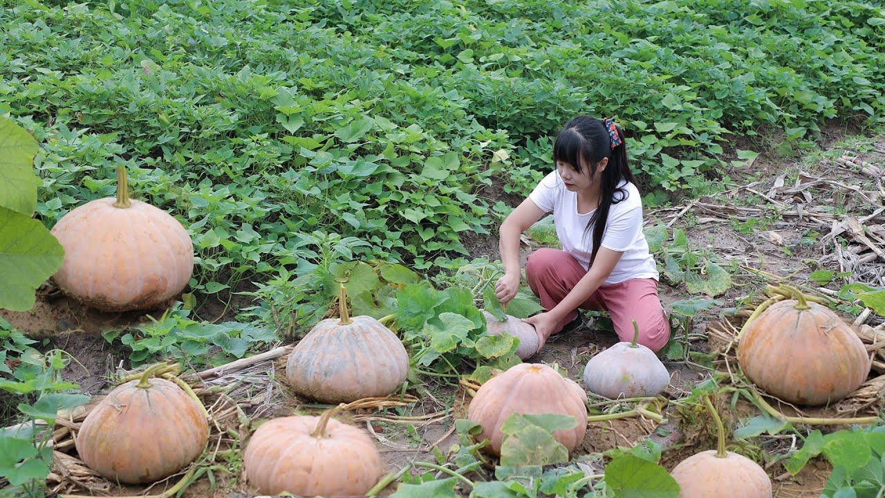 【二米炊烟】Pumpkins 收穫100多個南瓜,烹飪美味的南瓜宴