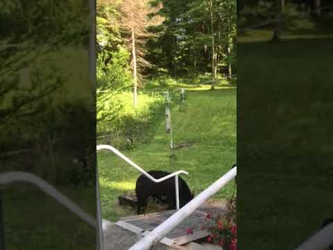 A black bear was spotted playing with a bird feeder in a Beekman backyard.