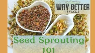 Seed Sprouting 101: The Basics