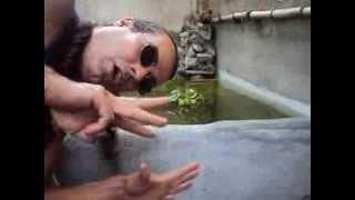 como tirar a agua verde (com algas) filtro+uv