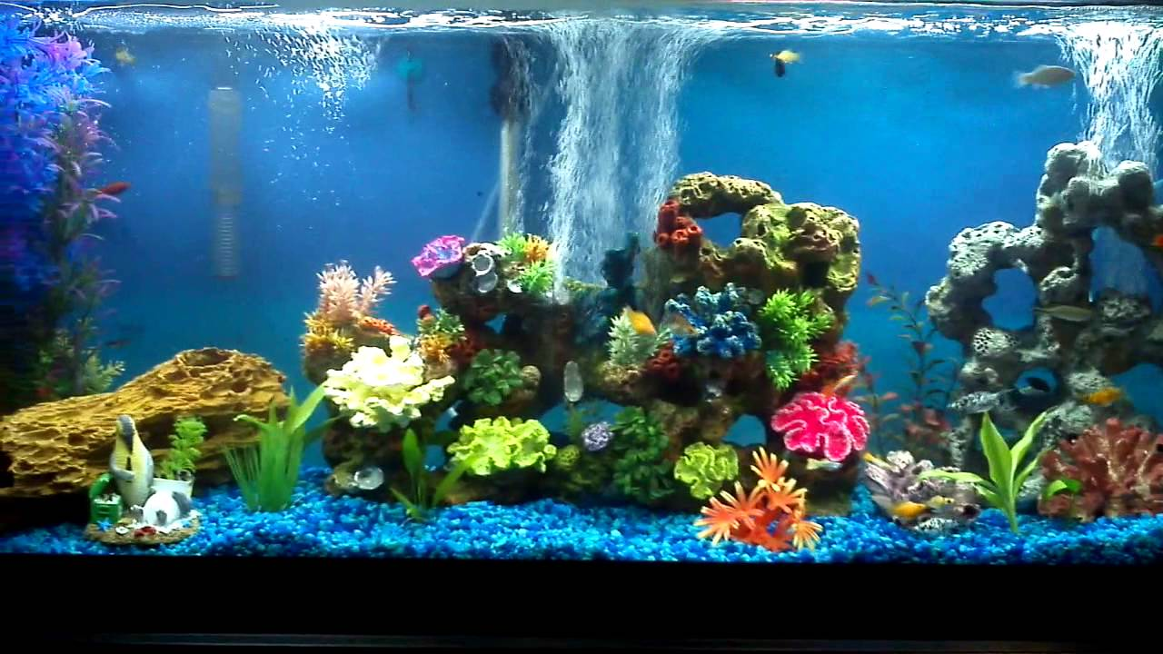 55 Gallon Freshwater Community Aquarium 30 Fish - YouTube