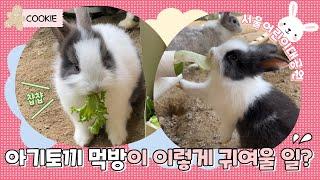 7월 동물원 쿠키 영상(아기 토끼 먹방)썸네일