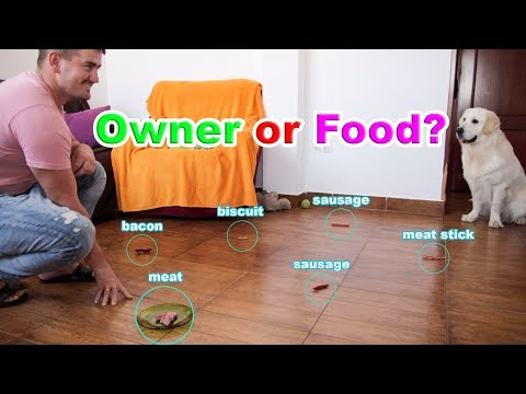 What will the Dog choose: Owner or Food? Funny Dog CHALLENGE #1