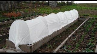 Укрытие для клубники (земляники садовой)