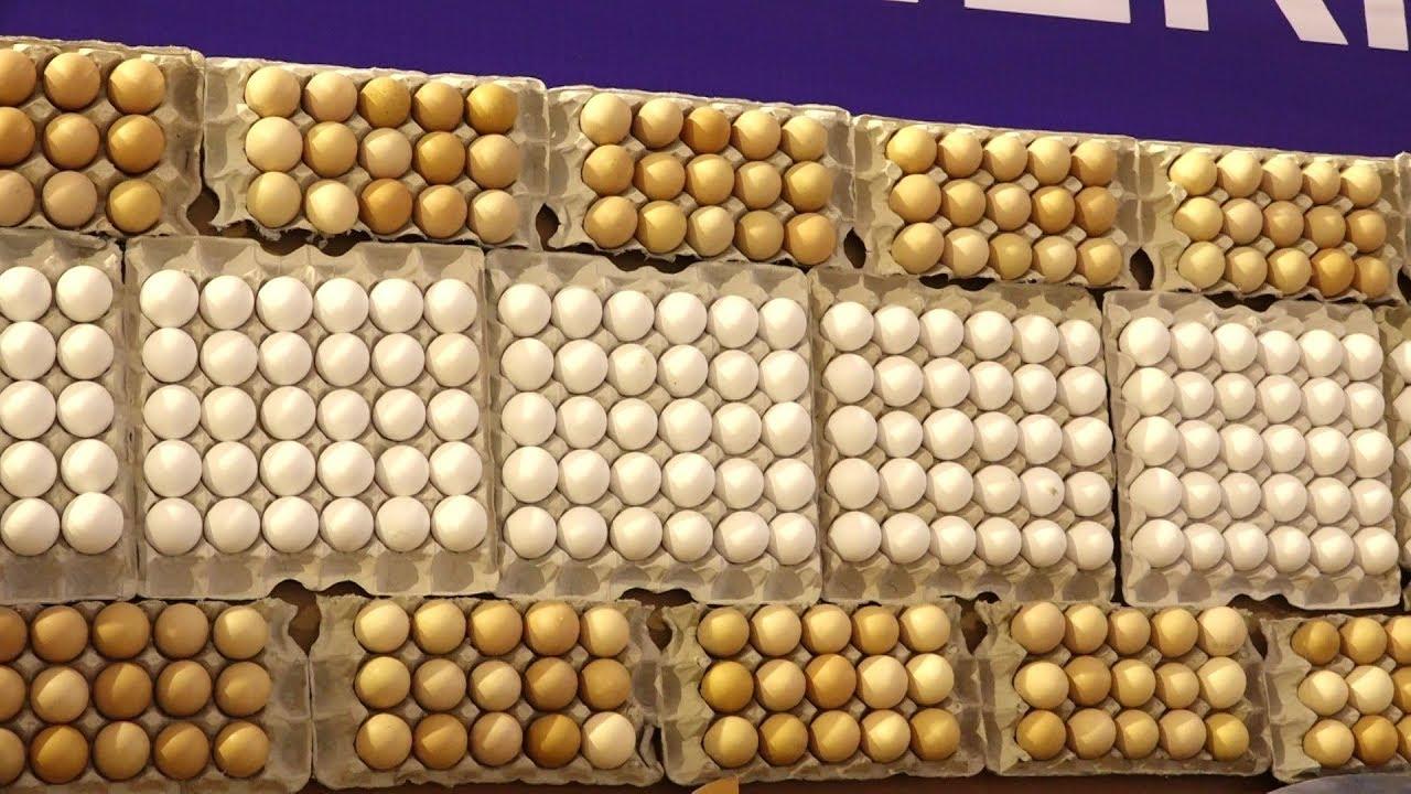 Poultry Hatchery | Midnapore Hatcheries Group | Kolkata International  Poultry Fair