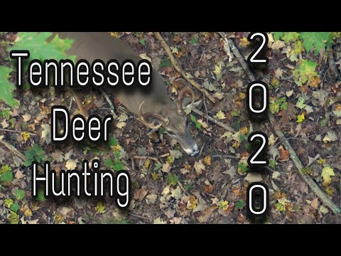 Tennessee Deer Hunting 2020 : October Action!!