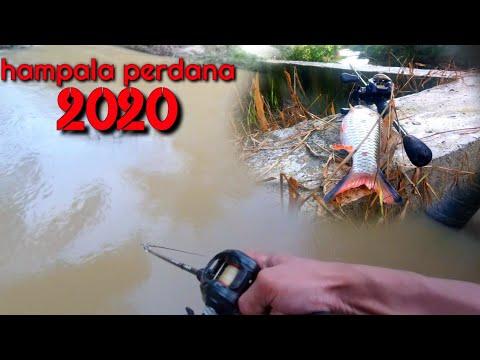 Seneng Banget Dapat Ikan HAMPALA PERDANA 2020 // CASTING HAMPALA