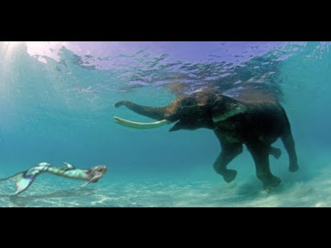 the-journey-of-mermaid-melissa-the-real-life-mermaid-update