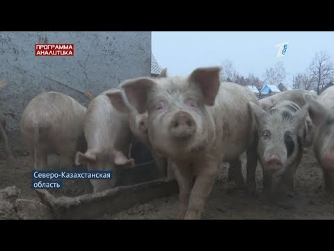 Чума под боком: придёт ли вирус из России в Казахстан?