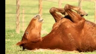 Ballad of a Runaway Horse