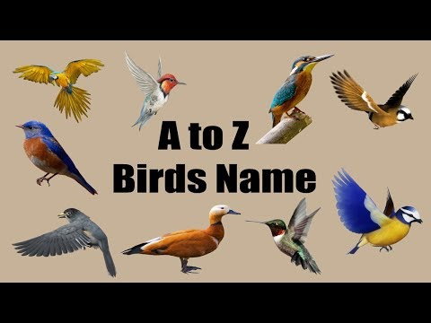 Birds Name Learning A To Z For Kids | BD Kids