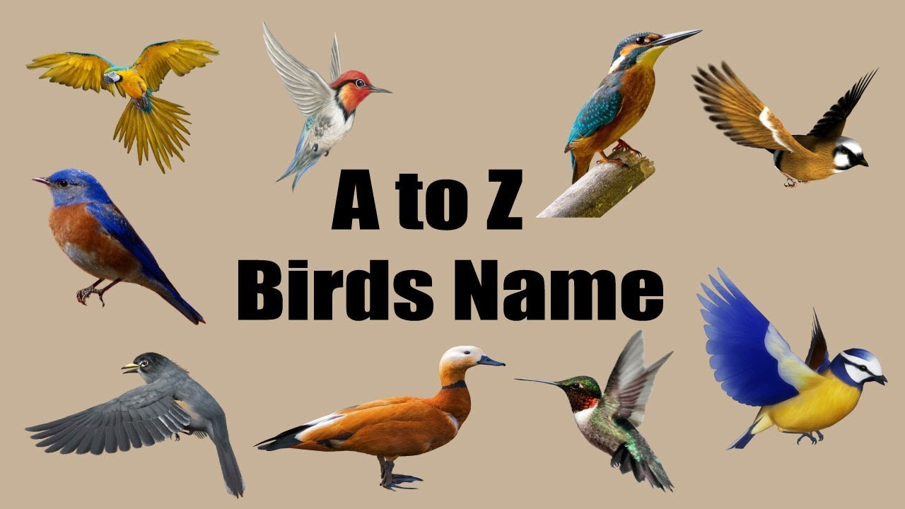 Birds Name Learning A To Z For Kids Bd Kids Youtube