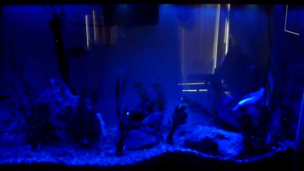 Marineland blue white hidden led lighting system youtube mozeypictures Image collections