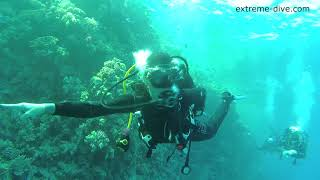Life and diving in the Red Sea