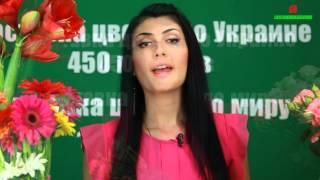 Как определить свежесть цветов? http://buket-express.ua/(Как определить что цветы свежие? Видео-советы флориста. Доставка цветов и букетов по Киеву, Украине и миру...., 2014-07-27T20:42:57.000Z)
