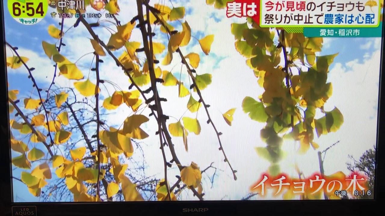 テレビ キャッチ 中京