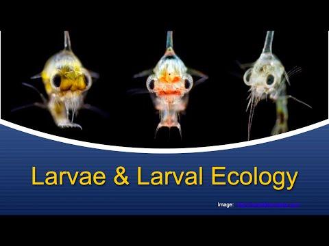 Marine Biology At Home 5: Larvae & Larval Ecology