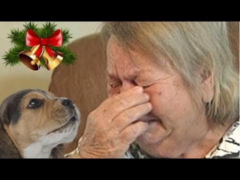 People's Reactions To Kitten And Puppy Surprise On Christmas Compilation 2017