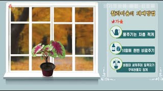 사회문화상식 공기정화에 좋은 화초들 (1)