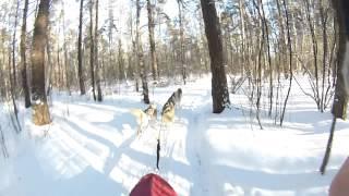 упряжка 4 собаки, тренировка, 8.2 километра