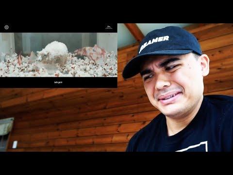 LAY 레이 'SHEEP (羊)' MV Reaction [ARE WE THE SHEEP?]