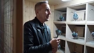 Przemek Jędrzejczak nowe gołębie w rozpłodzie