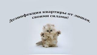 видео Дезинфекция квартиры