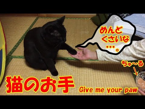 猫のお手。Japanese Black cat Give me your paw‼