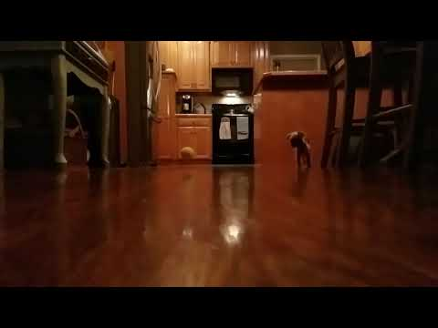 Cutest ball chase ever!