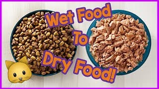 Wet Food to Dry Food for Cats - Can cats only eat dry food?