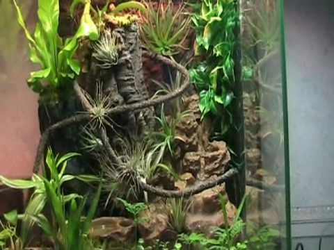 tropen terrarium youtube. Black Bedroom Furniture Sets. Home Design Ideas