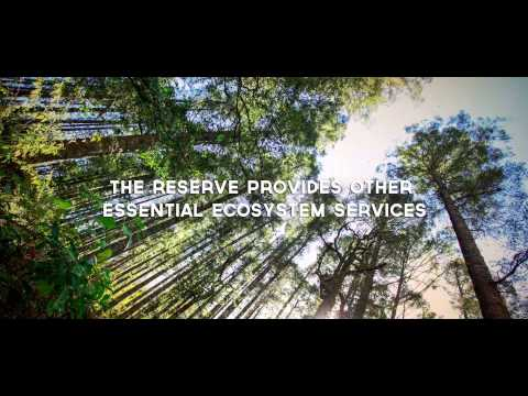 Monarch Butterfly Biosphere Reserve Ecosystem Services