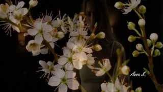 ☆ Moonlight Flower - Michael Cretu ☆