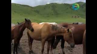 Немецкая ферма в кыргызских горах