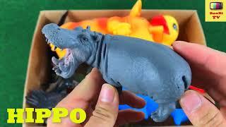 домашние животные для детей на английском Мы учим животных для самых маленьких bonbi tv