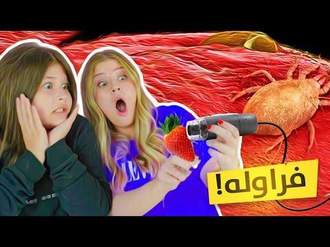 تحدي احزر ماذا ترى تحت المجهر !!! 😱 انصدمنا 😭 مستحيل ناكول فراولة 🍓😭 - Rimmy
