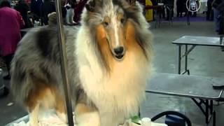 В США стартовала Вестминстерская выставка собак (новости)