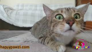 Most Epic & Funniest Cat Moment videos Compilation ever। Cat Lovers 🐱