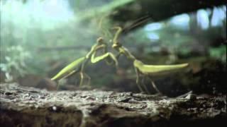 Реклама Volkswagen Beetle о жизни жуков(Сравнить авто Фольксваген Жук с настоящим жуком - очевидная, но вместе с тем, блестящая идея! Продакшн рекла..., 2013-05-21T13:57:58.000Z)