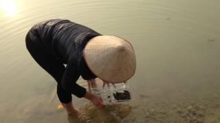 Thân cò lặn lội bờ ao