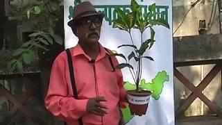 Fareed Khan Ji [bollywood actor] Plantation