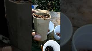 Getting Started With Growing Beans