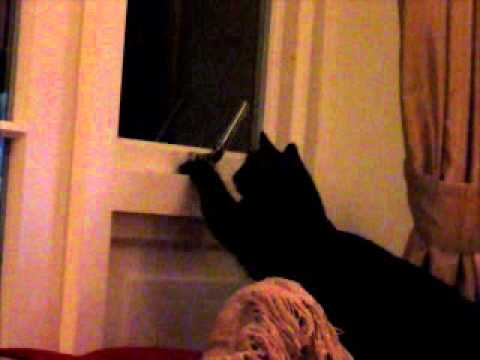 Cat escapes through window