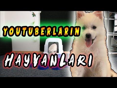 YOUTUBERLARIN KÖPEKLERİ ( Yeni Köpek )