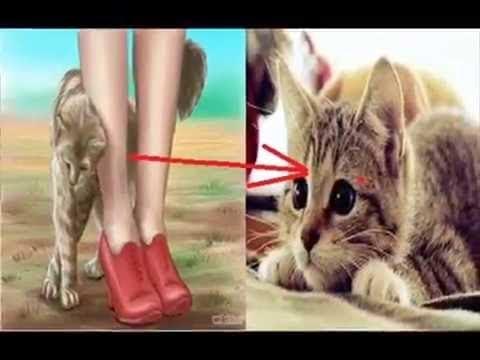 إذا اقتربت منك قطة.. فهذا يعني أن هناك 3 رسائل من الله لك !!
