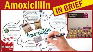 Amoxicillin 500mg Capsule: What Is Amoxicillin Used For, Dosage, Contraindications & Precautions?