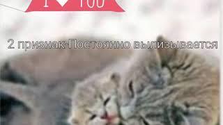 Признаки того что у вашей кошки скоро будут роды)